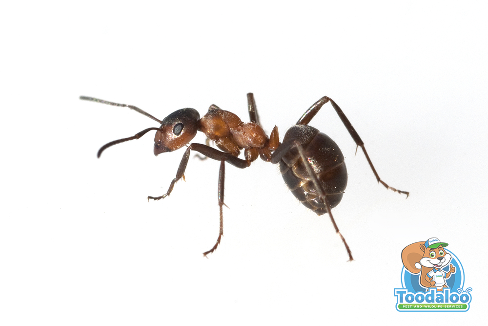Axing Ant Infestations