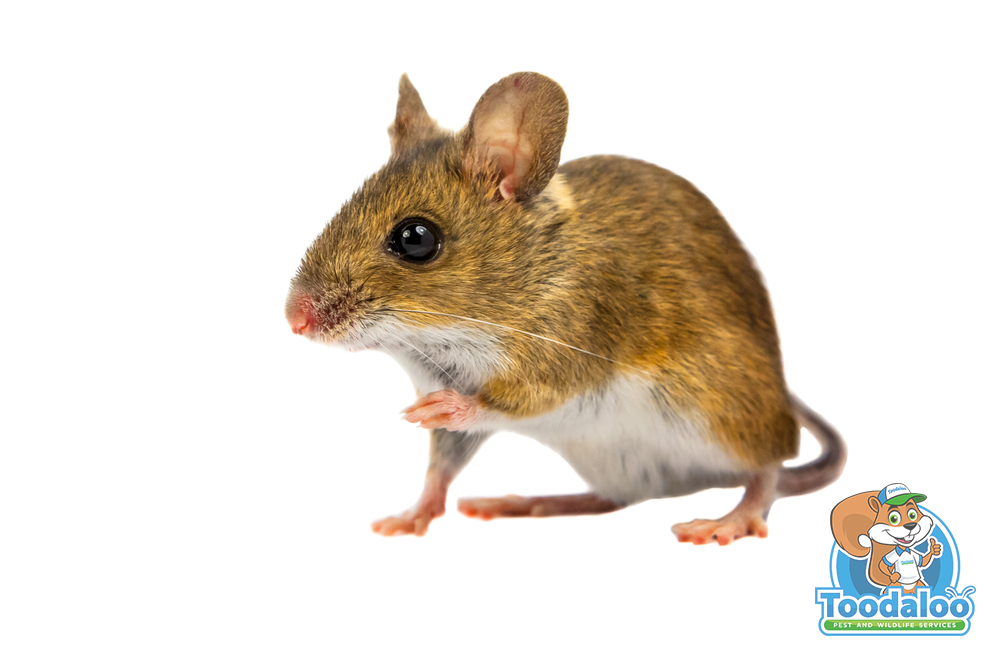 Proper Pest Control in the Food Service Industry