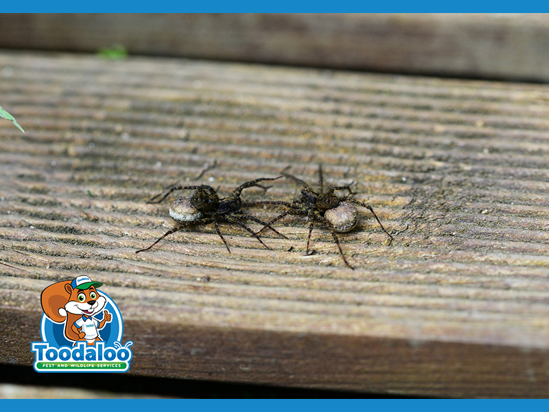 Adios Arachnids: How to Keep Spiders Out