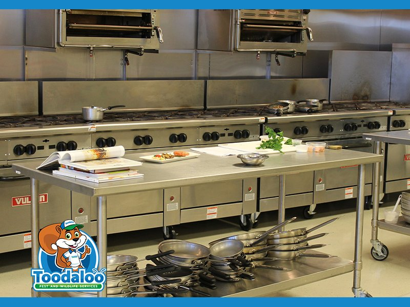 Keeping Commercial Kitchens Clean